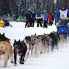 48 Year Old John Baker Wins Iditarod Dog Sled Race In Alaska