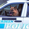 Man Arrested For Animal Harassment For Barking At Police Dog