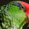 Escaped parrot bites senior's ankles at Senior Center in Catonsville