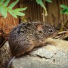 Rare Hantavirus outbreak at Yosemite Park kills one man