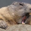 Rabid beaver attacks 83 year old woman in Virginia lake