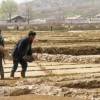 Human Feces Sold In North Korea Poo Shops