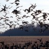 Birds Falling Out Of Sky in Arkansas, Officials Stumped