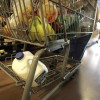 Shopping Carts Covered In Feces Beware