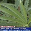 Marijuana Found Near Osama Bin Laden's Hideout, Servants Bought Coke and Pepsi