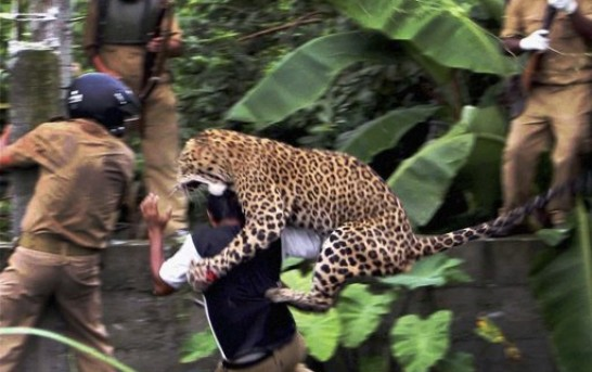 Crazed leopard goes on rampage in India and mauls villagers