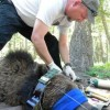 Troubled Grizzly bear killed for eating chickens in Montana