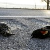 Scotts Miracle Gro pleads guilty to selling millions of packages of poisoned bird seed