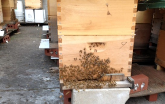 3 million bees evicted from beekeeper house in New York City