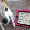 Viral Dog Shaming pictures you will laugh till your insides shatter