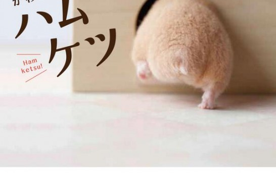Japanese obsessing over Hamster butts, getting weird