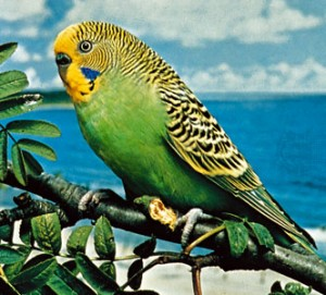 Why won't this parakeet eat your diarrhea?