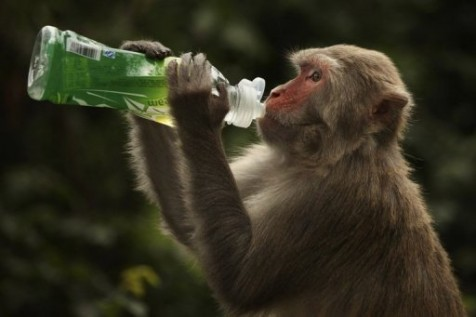 Monkeys on birth control in Hong Kong