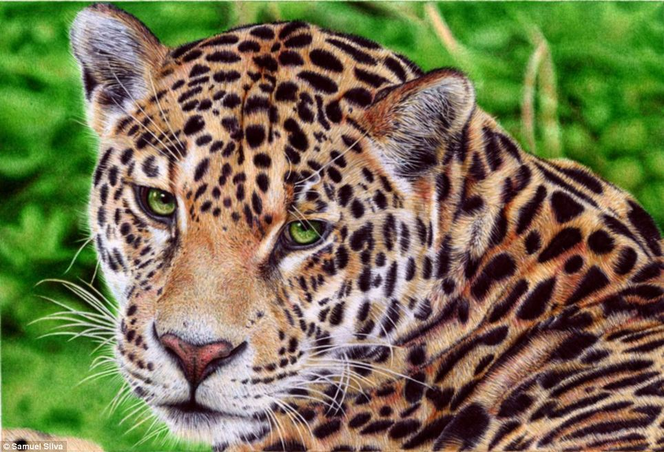 Silva's first jaguar picture took him only 15 hours to complete © Samuel Silva