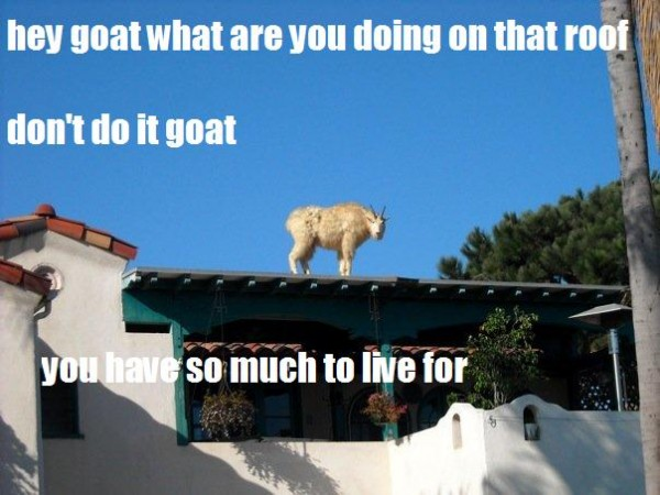dont do it goat