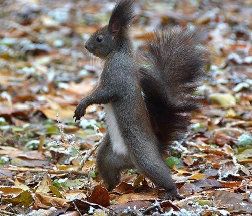 Haters gonna hate squirrel strolls through park like a boss
