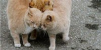 Cat group hug