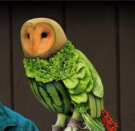 owl made out of fruit