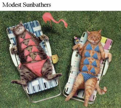 Sunbathing Cats