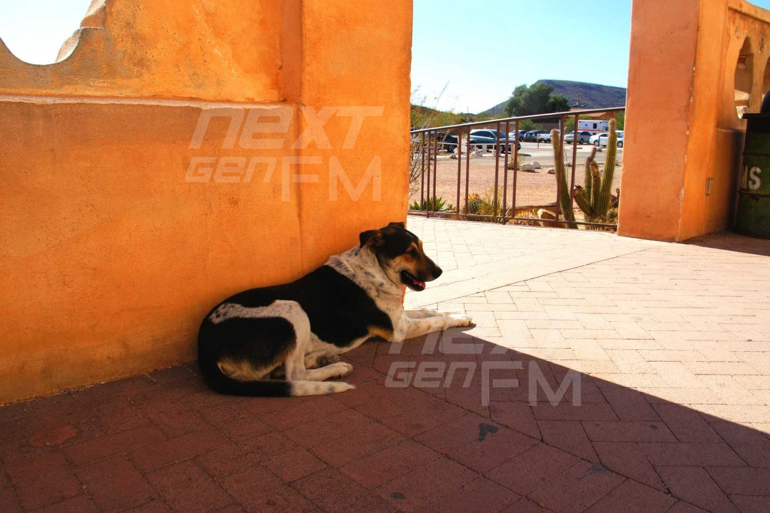 A dog takes a break from the hot Arizona sun in the shade of the church.